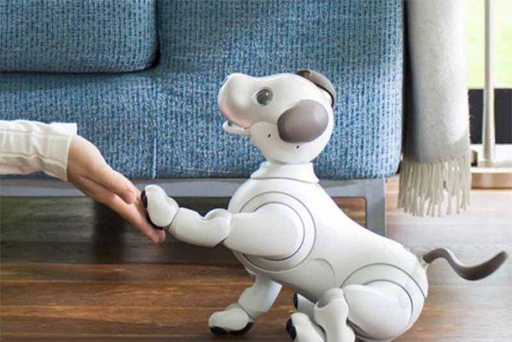 robot-anjing-aibo-punya-memori-dan-kenali-100-wajah-manusia